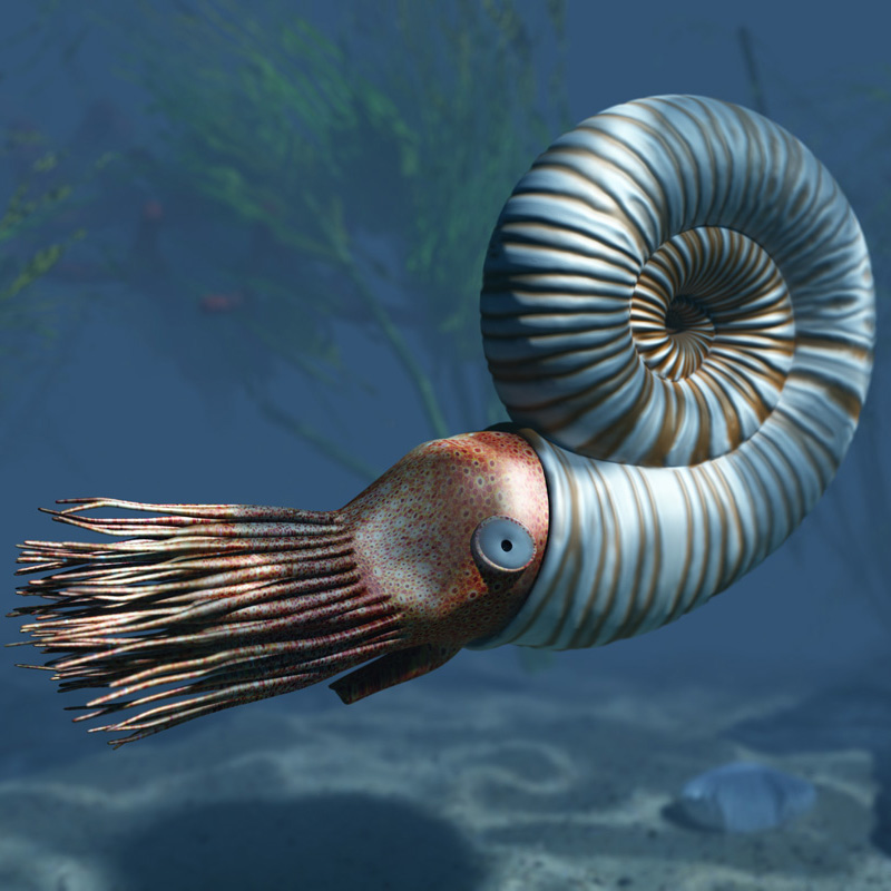Early Jurassic ammonite (from History of Earth - Mesozoic Era)