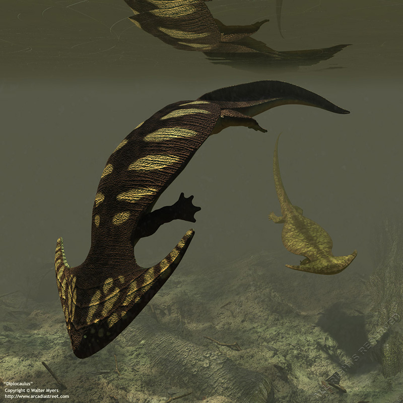Diplocaulus (from History of Earth - Paleozoic Era)